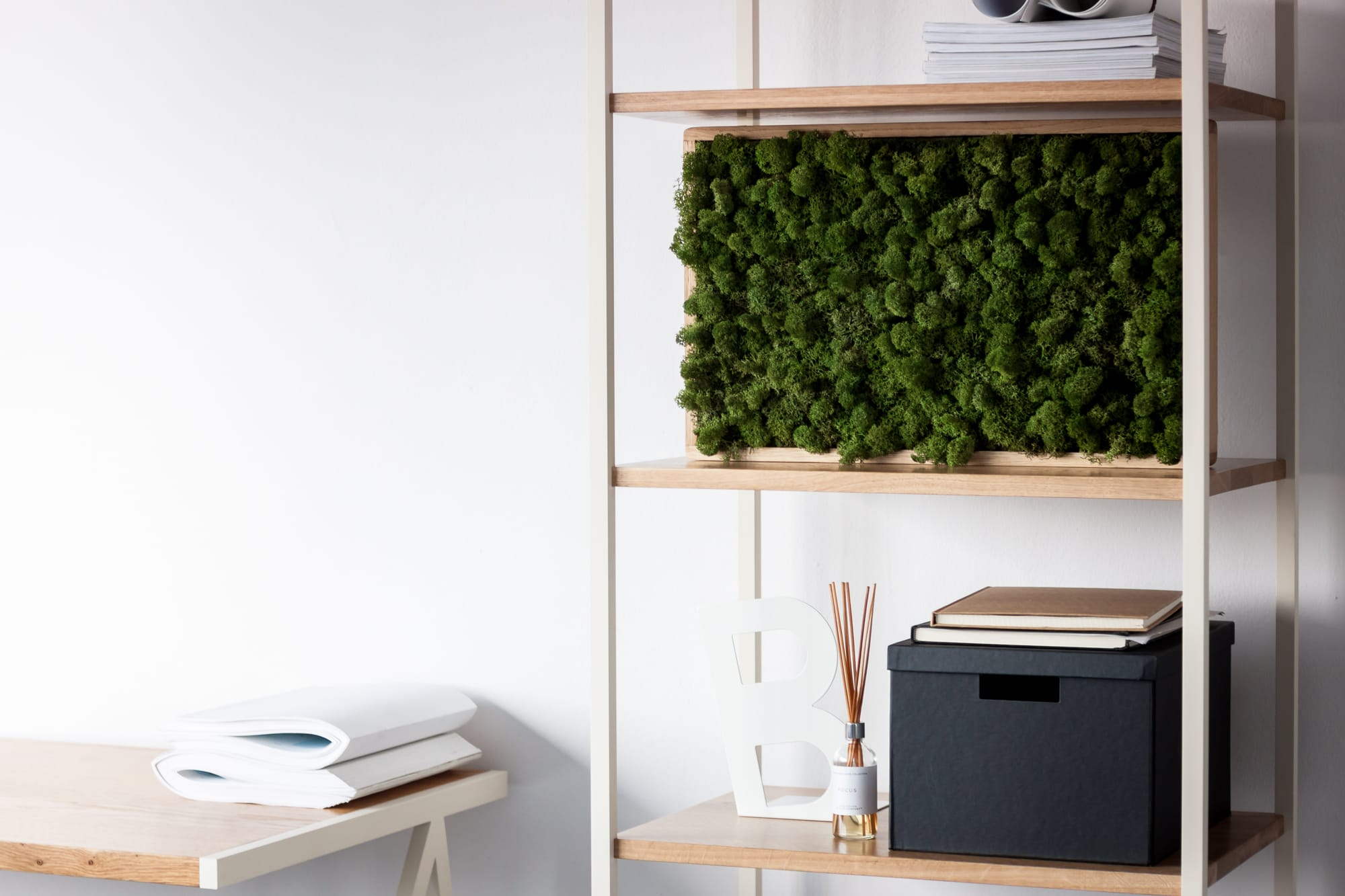 Wooden frame with a moss on a minimalistic bookstand in white studio. borcas brand