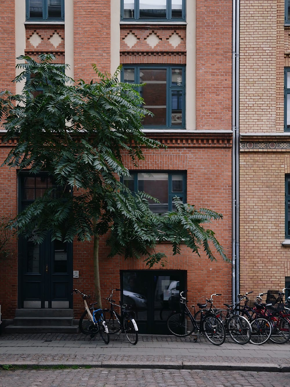 A tree growing next to the sidewalk. Copenhagen