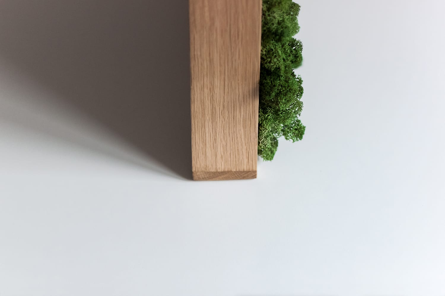 Profile of frame with a moss inside in a white studio. borcas brand