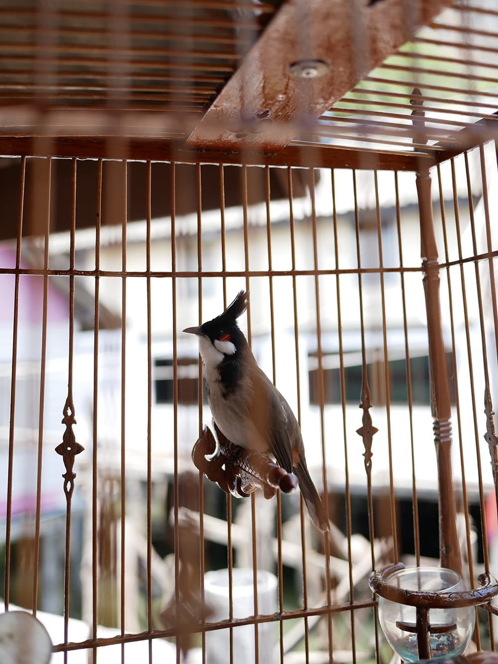 Little bird in a cage on tropical island. Thailand